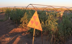 An experimental agricultural plot located in the Polygon nuclear test site in Kazakhstan