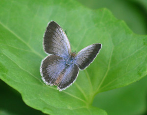 Fukushima Butterfly Mutation Study Follow Up