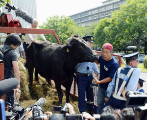 Fukushima cattle farmer brings cow for protest at farm ministry