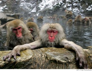 Fukushima Monkeys May Show Radiation Damage