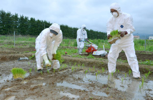 Fukushima Rice To Be Sold In London