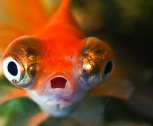 shockedfish